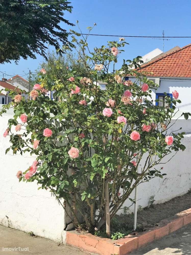 Quintas e herdades para comprar, Cortiçadas de Lavre e Lavre, Montemor-o-Novo, Évora - Foto 8