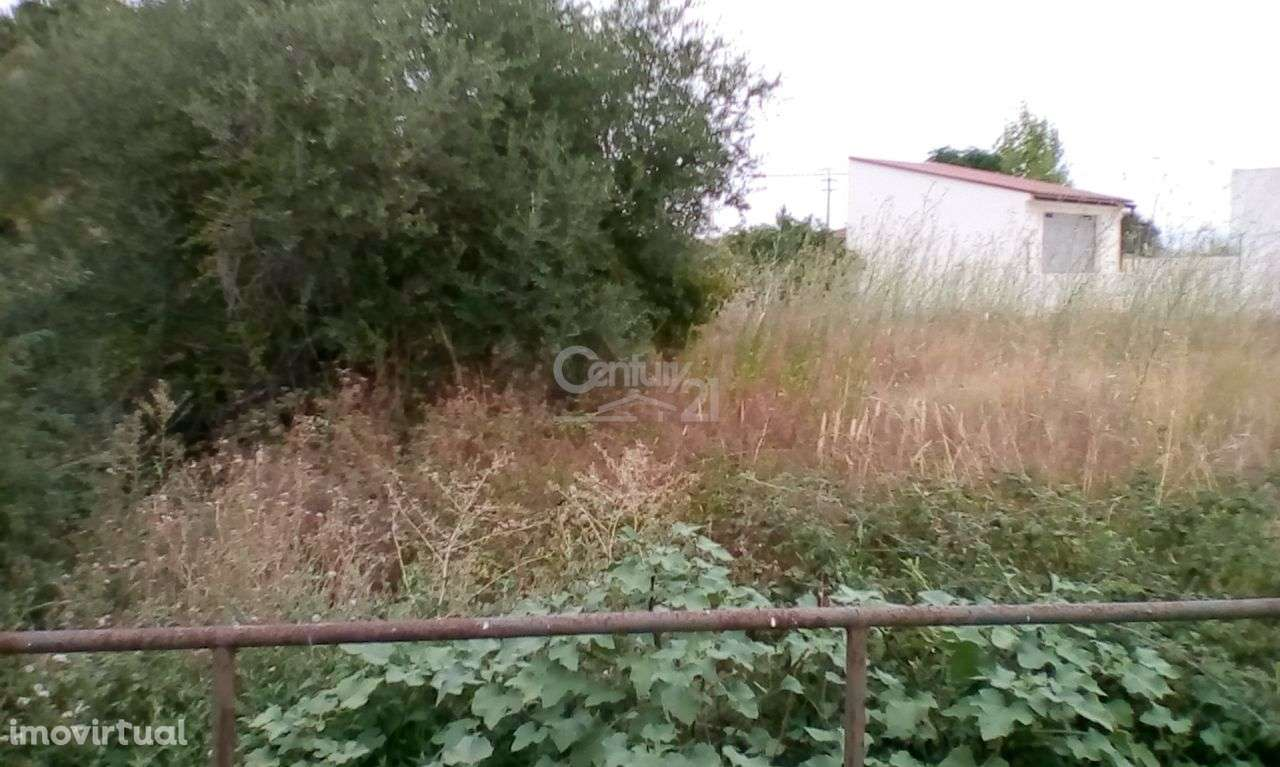 Terreno para comprar, Riachos, Santarém - Foto 4