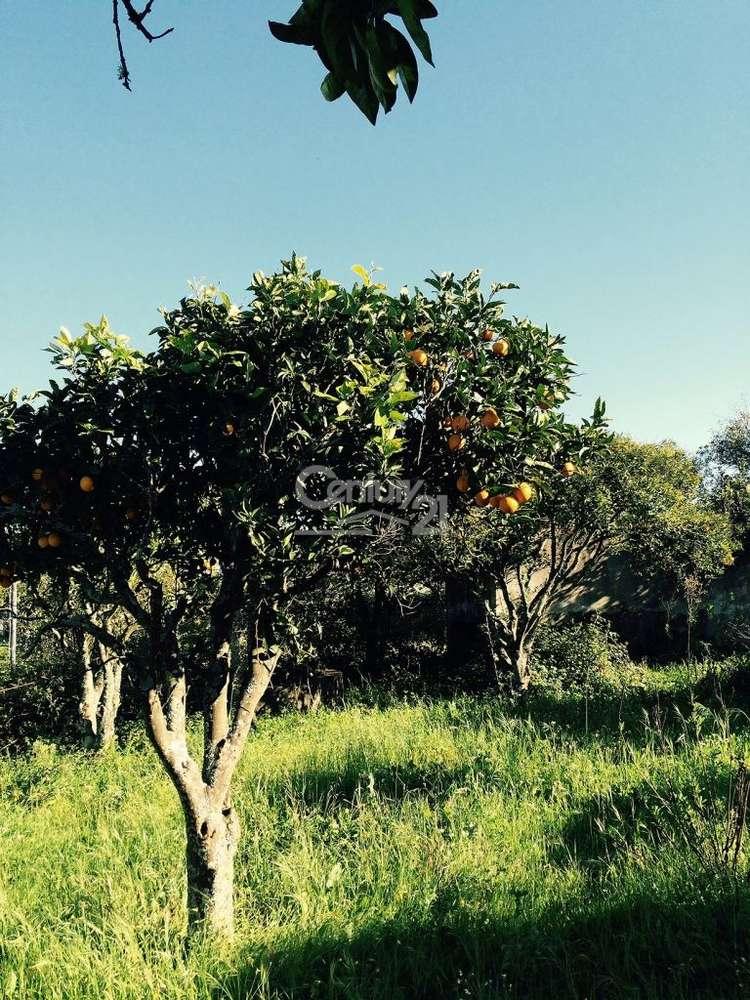 Quintas e herdades para comprar, Ereira e Lapa, Cartaxo, Santarém - Foto 5