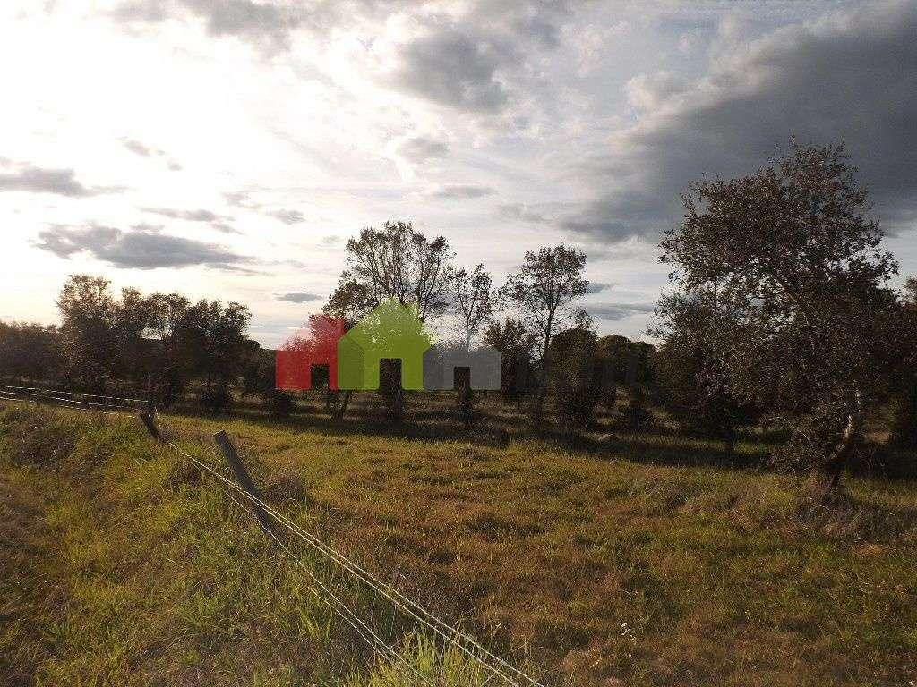 Quintas e herdades para comprar, Beja (Salvador e Santa Maria da Feira), Beja - Foto 3