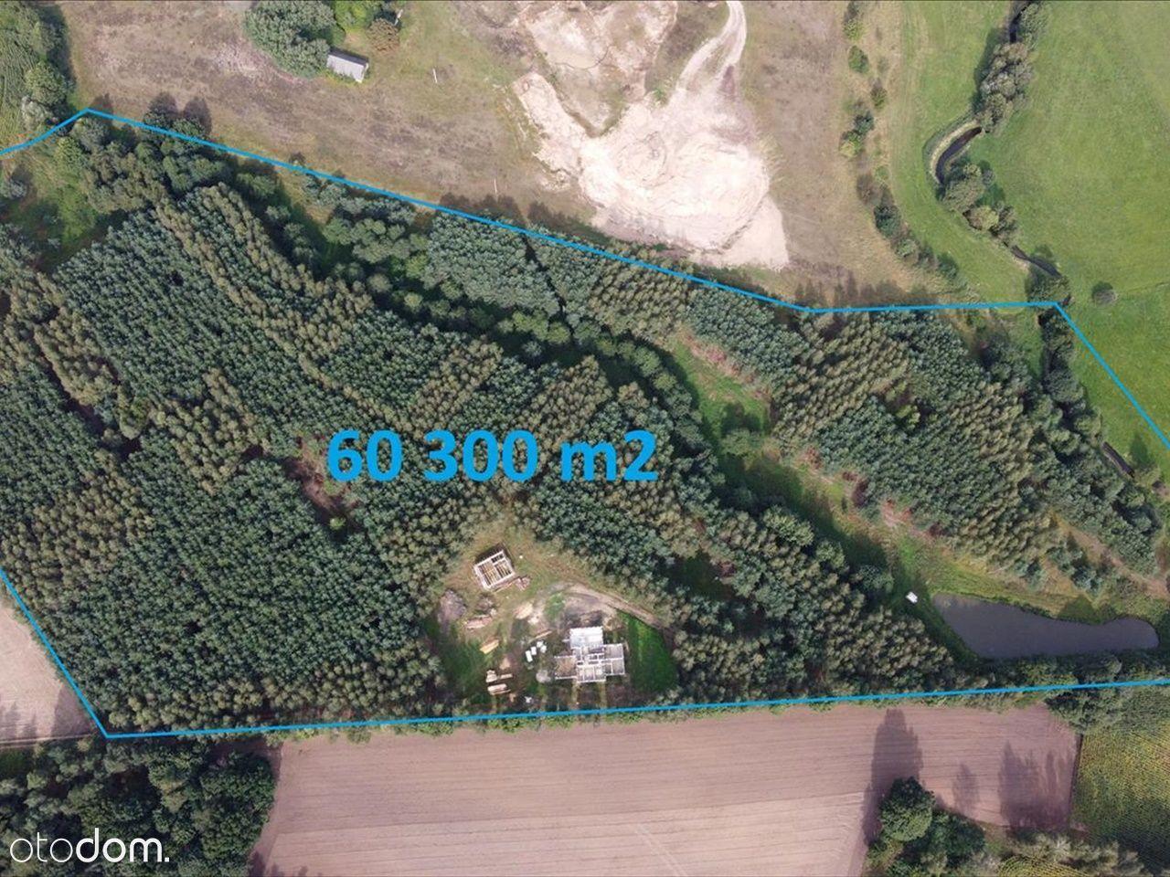Działka o pow. 6 ha w Lipnicy
