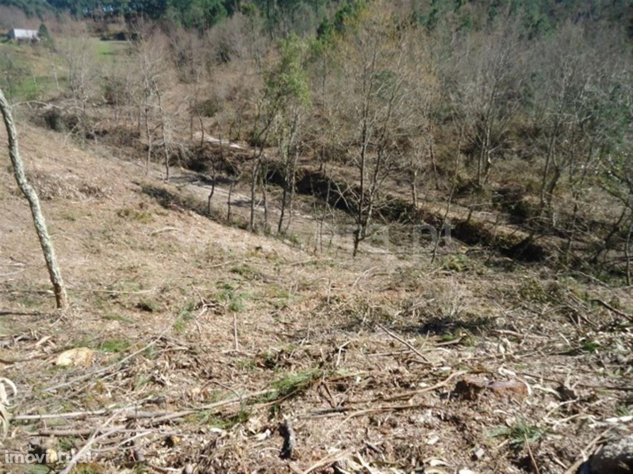 Terreno com 18.800 m2 destinado a plantações em Cabeceiras de Basto