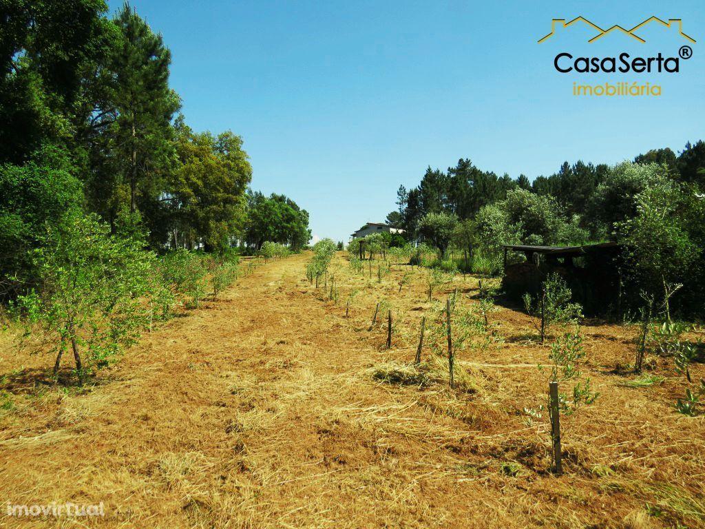 Terreno para comprar, Cabeçudo, Sertã, Castelo Branco - Foto 7
