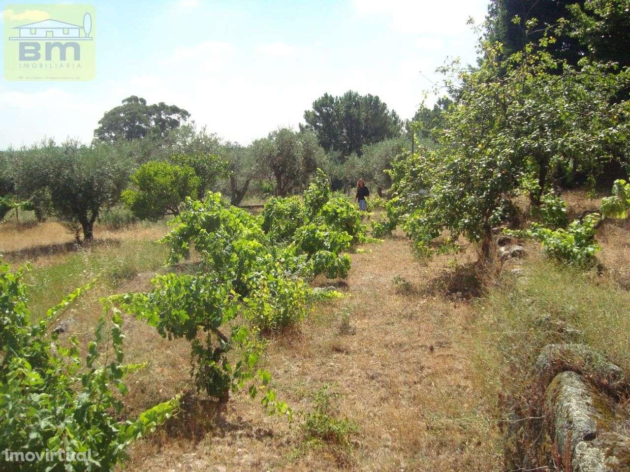 Quintas e herdades para comprar, Almaceda, Castelo Branco - Foto 24
