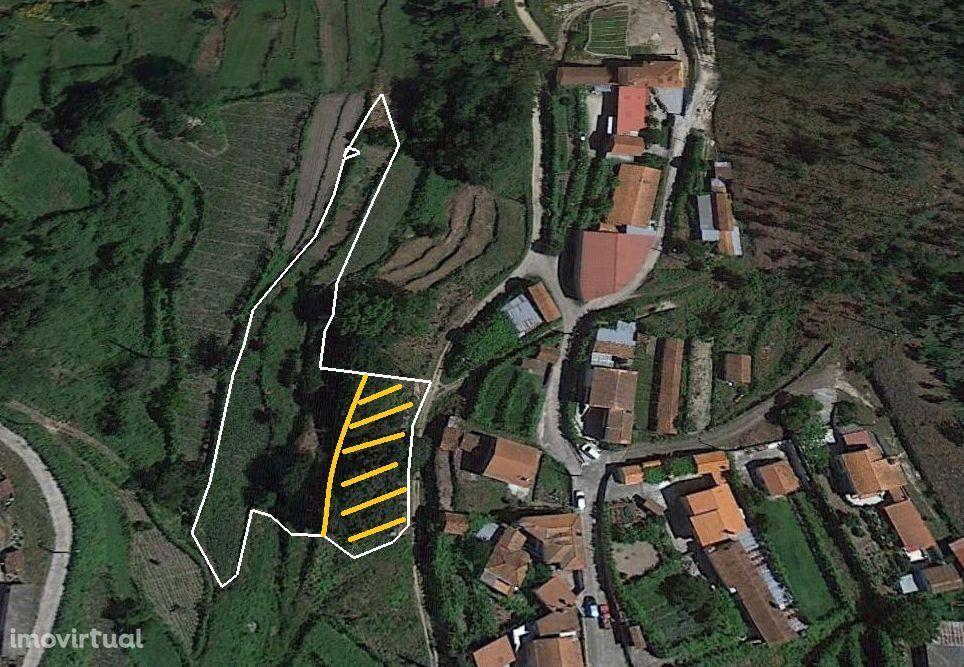 Terreno – Oliveira de Frades
