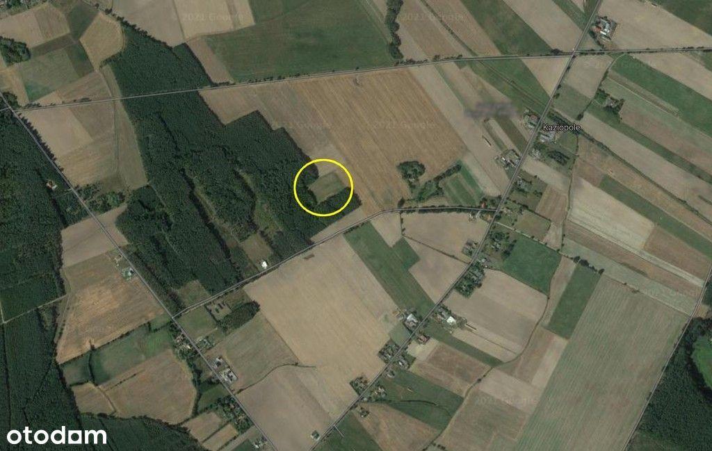 Działka, 9 999 m², Kaziopole