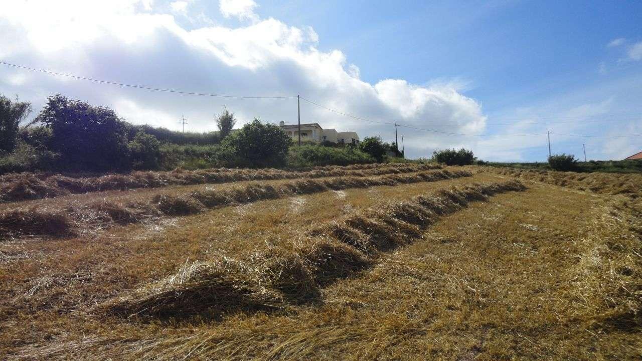 Quintas e herdades para comprar, Arruda dos Vinhos - Foto 15