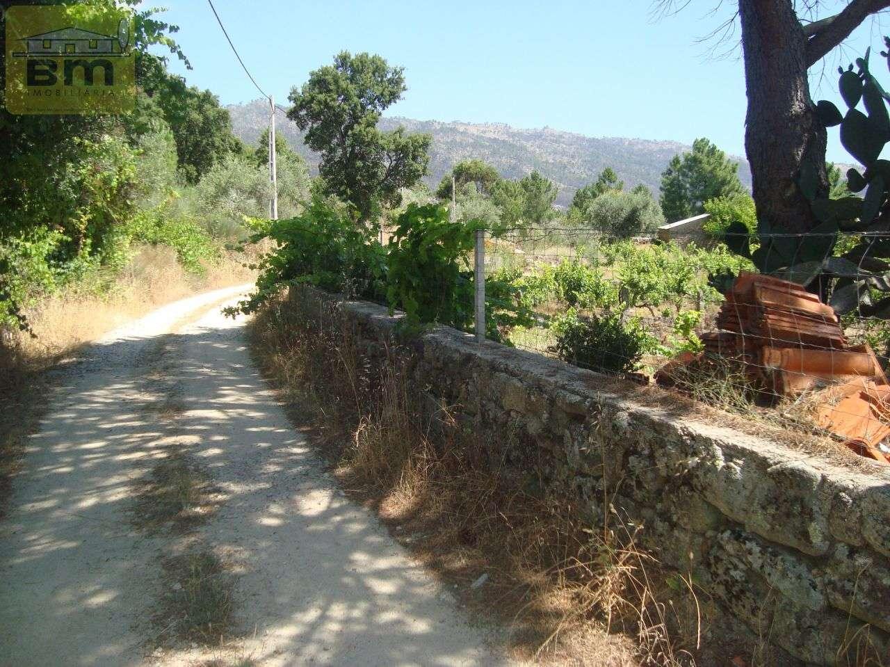Quintas e herdades para comprar, Almaceda, Castelo Branco - Foto 50