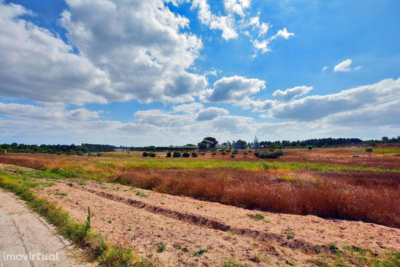 Quintas e herdades para comprar, Branca, Coruche, Santarém - Foto 54