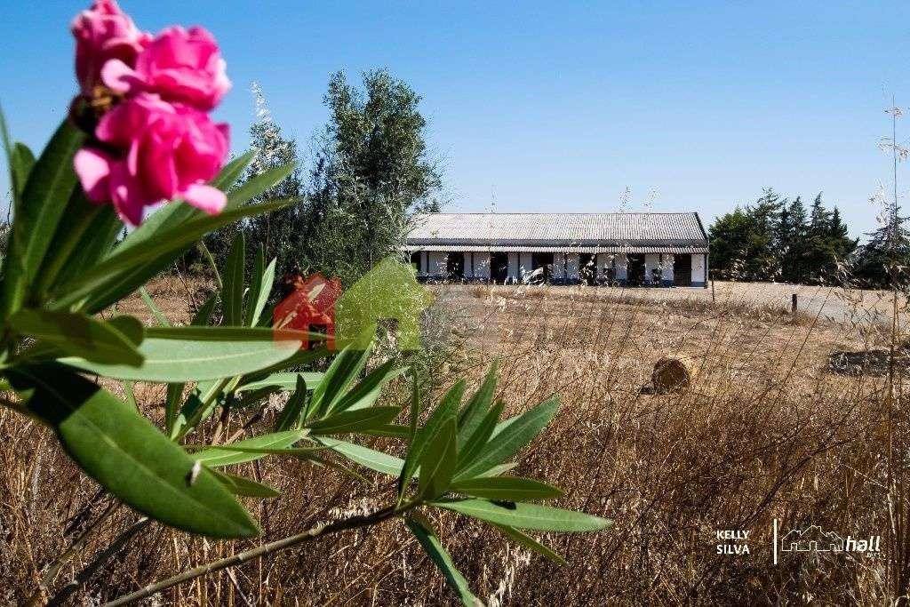 Quintas e herdades para comprar, Azinheira dos Barros, Setúbal - Foto 8