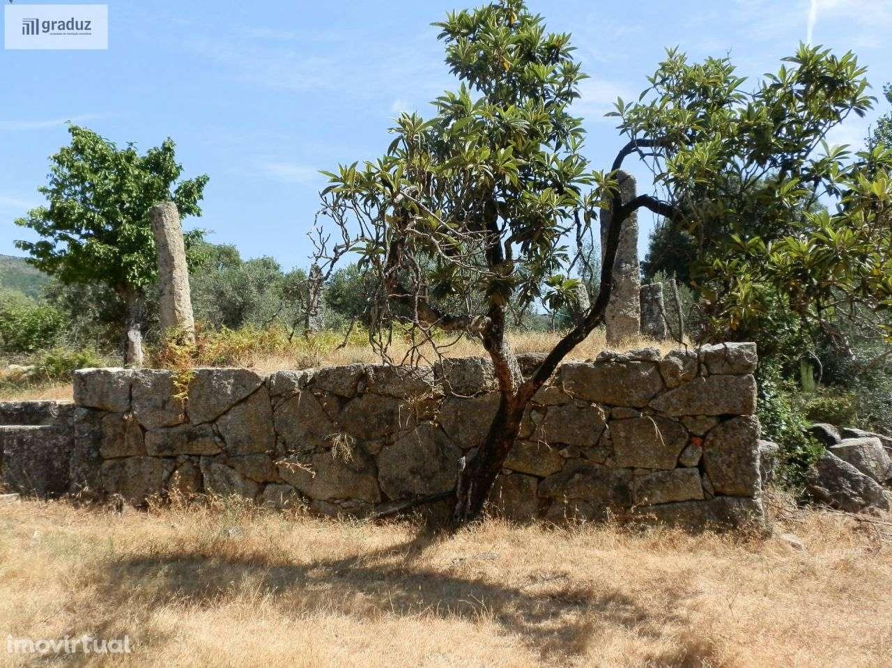 Quintas e herdades para comprar, Louriçal do Campo, Castelo Branco - Foto 28