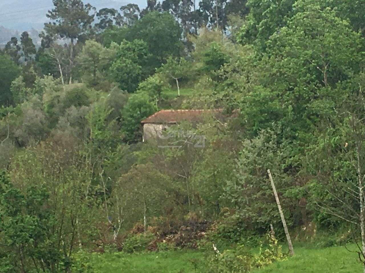 Quintas e herdades para comprar, Salamonde, Vieira do Minho, Braga - Foto 10
