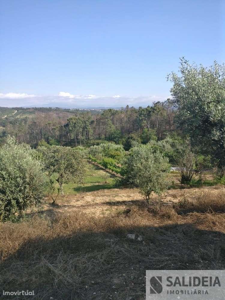 Terreno para comprar, Currelos, Papízios e Sobral, Viseu - Foto 2