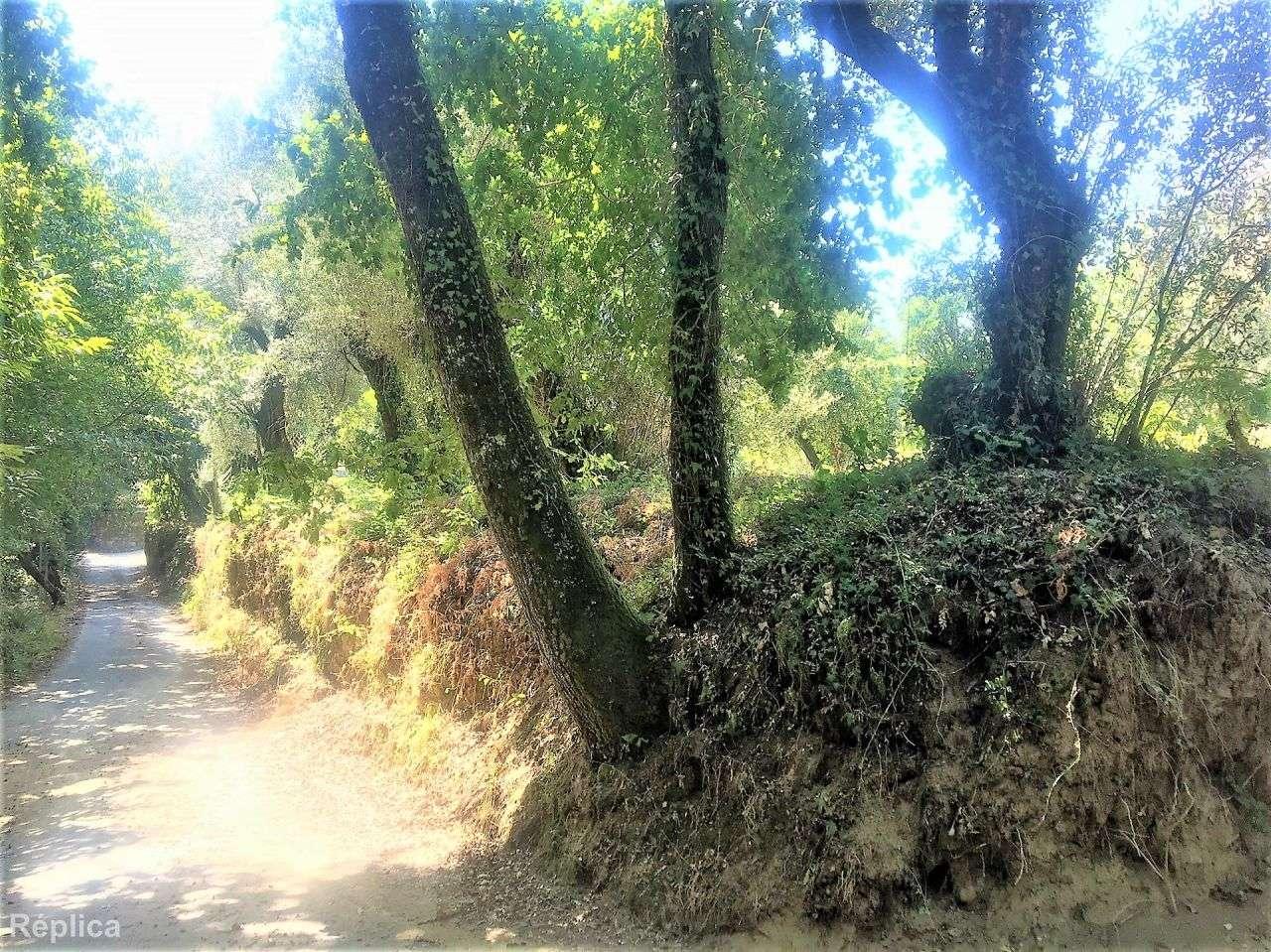 Terreno para comprar, Basto, Braga - Foto 3