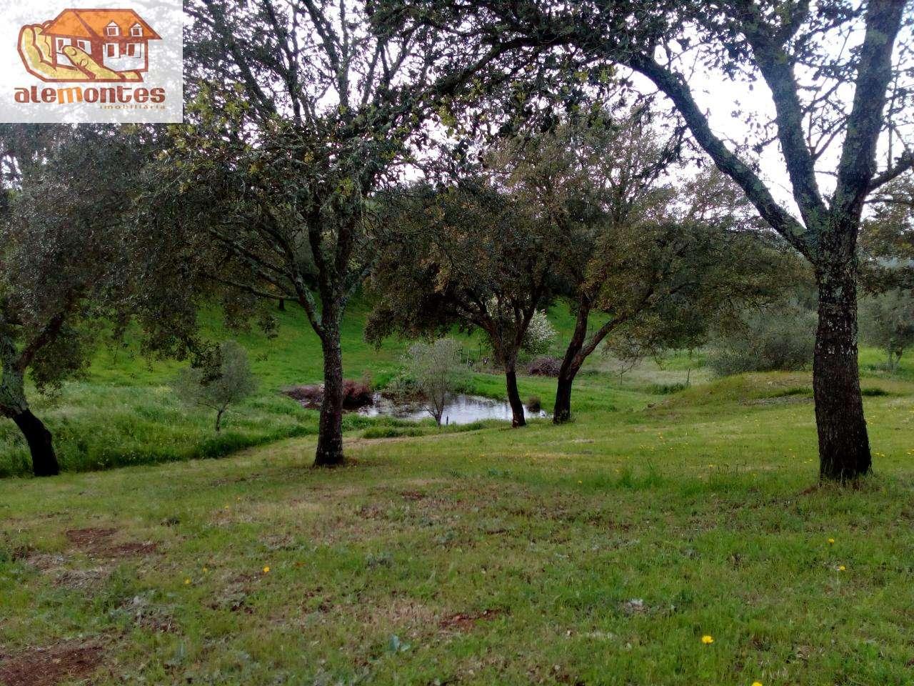 Quintas e herdades para comprar, Grândola e Santa Margarida da Serra, Setúbal - Foto 8