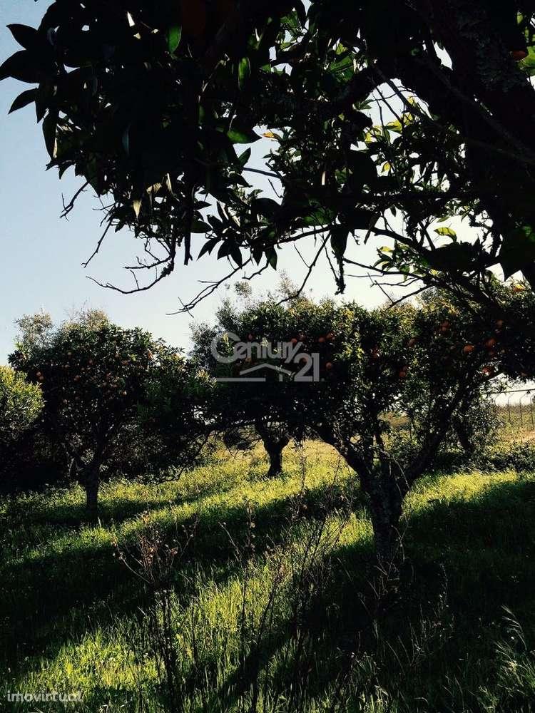 Quintas e herdades para comprar, Ereira e Lapa, Cartaxo, Santarém - Foto 7