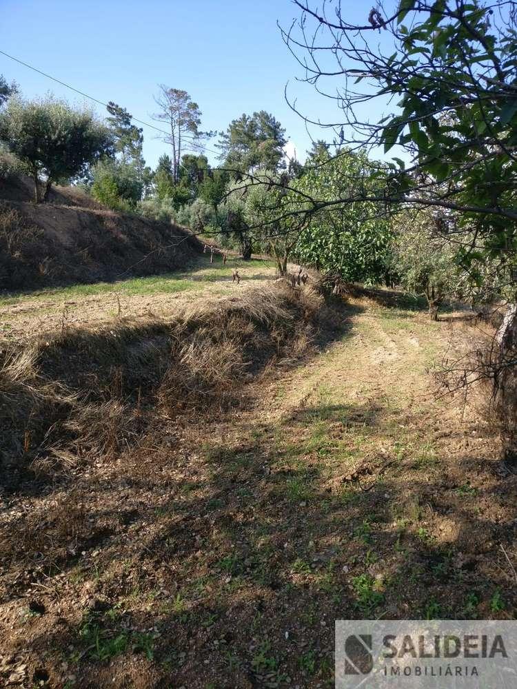 Terreno para comprar, Currelos, Papízios e Sobral, Viseu - Foto 18