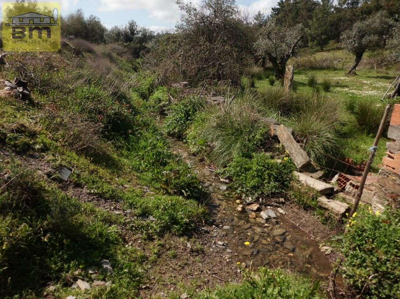 Quintas e herdades para comprar, Castelo Branco - Foto 5