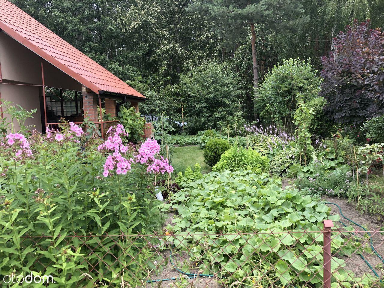 Sprzedam ogródek działkowy (ROD)