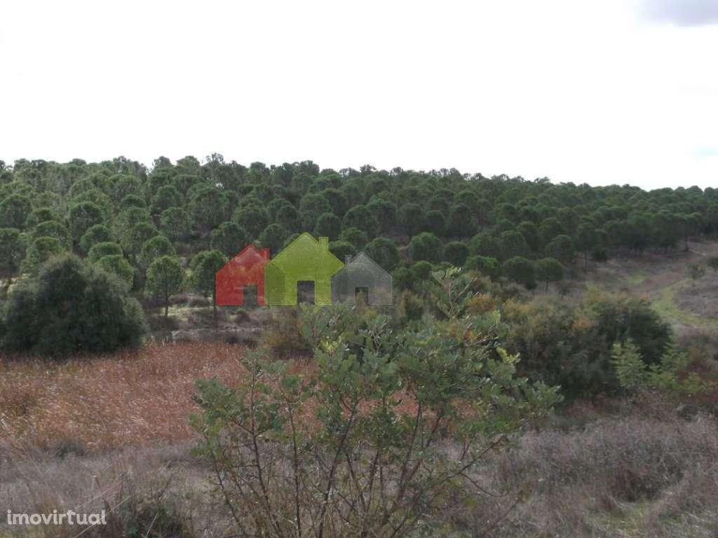 Quintas e herdades para comprar, Albernoa e Trindade, Beja - Foto 13