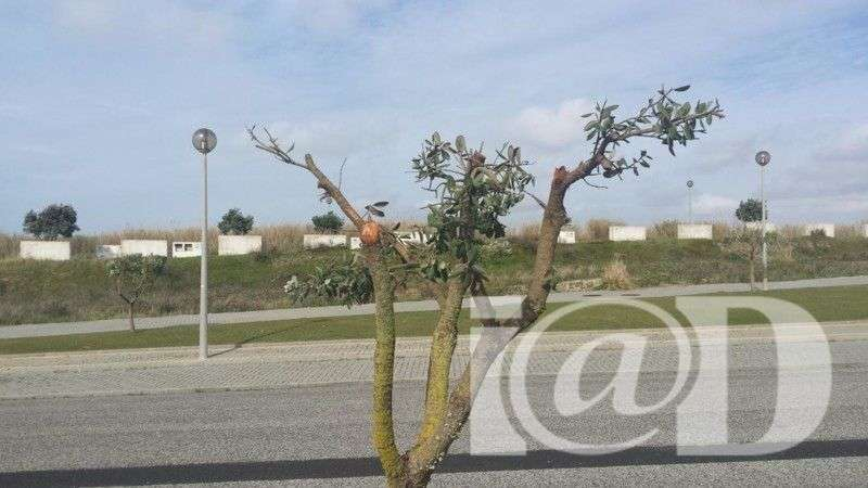 Terreno para comprar, Silveira, Lisboa - Foto 1