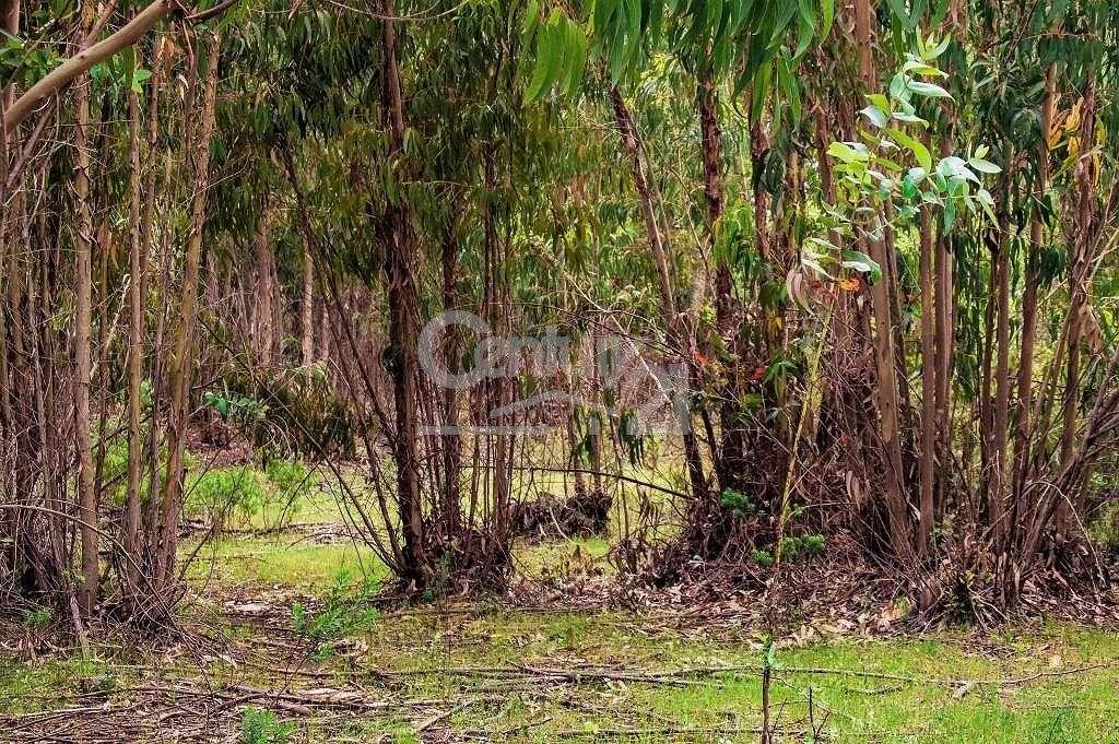 Quintas e herdades para comprar, Santiago do Cacém, Santa Cruz e São Bartolomeu da Serra, Setúbal - Foto 42