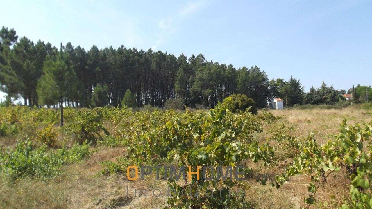 Quintas e herdades para comprar, Caria, Belmonte, Castelo Branco - Foto 17