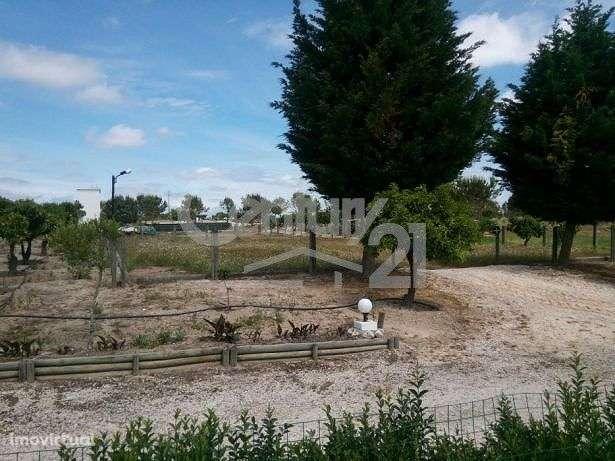 Quintas e herdades para comprar, Branca, Santarém - Foto 7