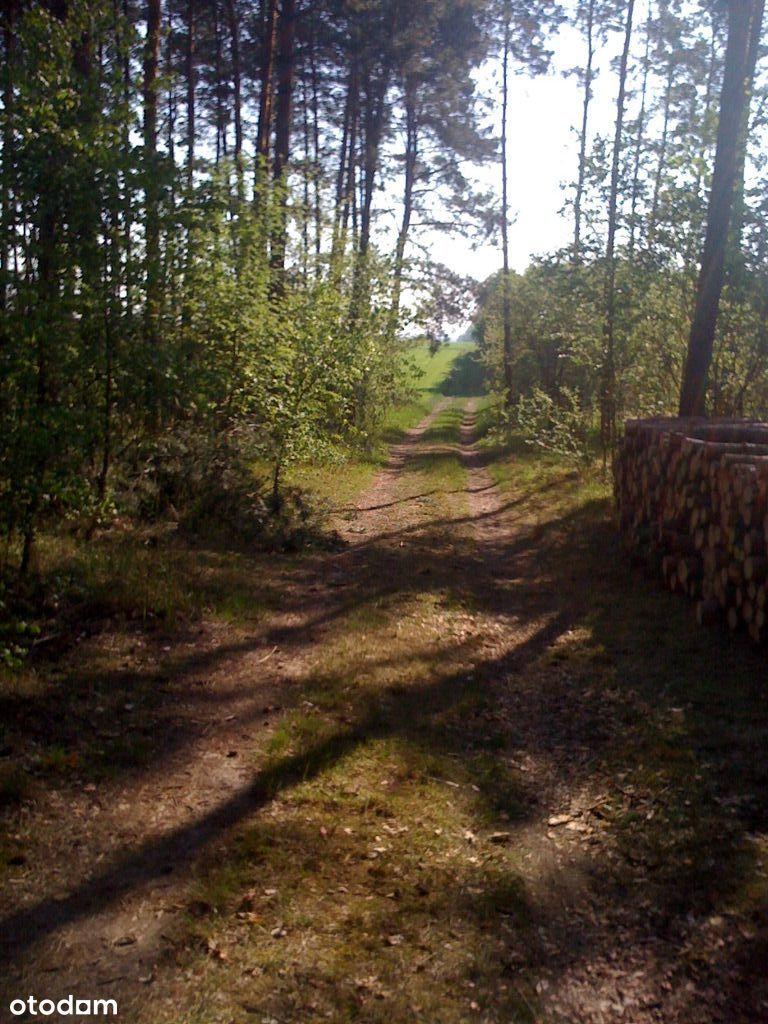 Enklawa leśna Suliszew