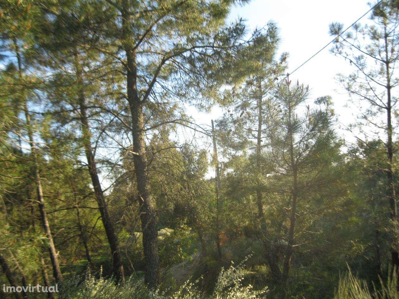 Terreno para comprar, Vale de Prazeres e Mata da Rainha, Castelo Branco - Foto 17