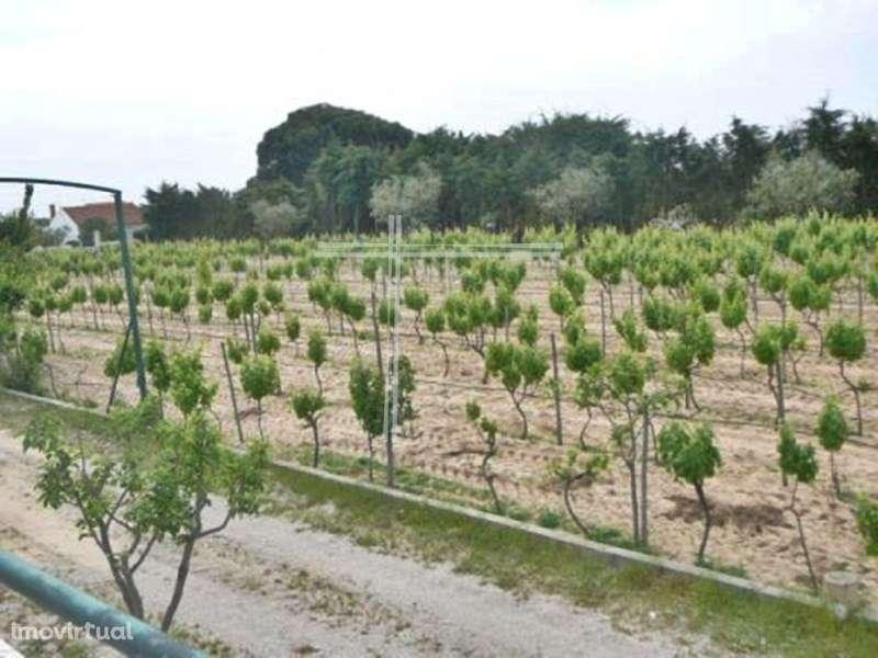 Quintas e herdades para comprar, Pinhal Novo, Setúbal - Foto 5