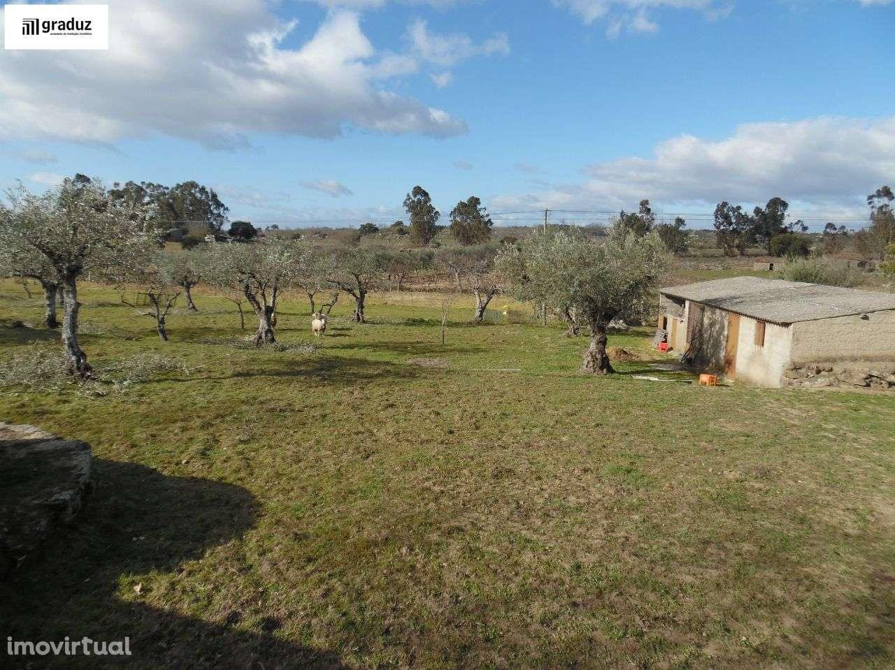 Terreno para comprar, Alcains, Castelo Branco - Foto 6