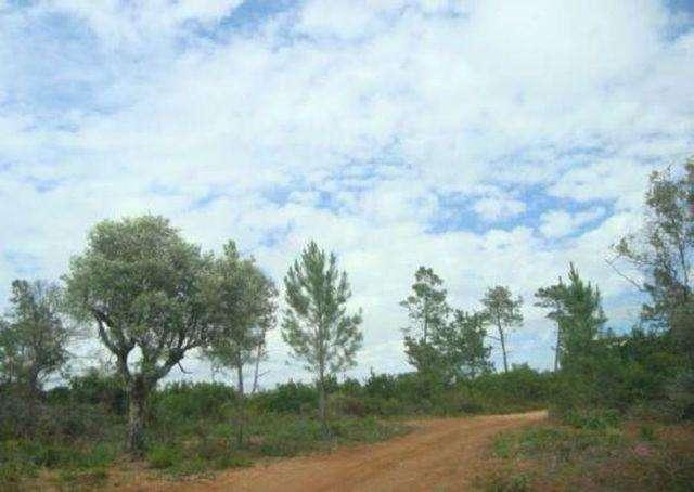 Terreno para comprar, Rio Maior - Foto 3