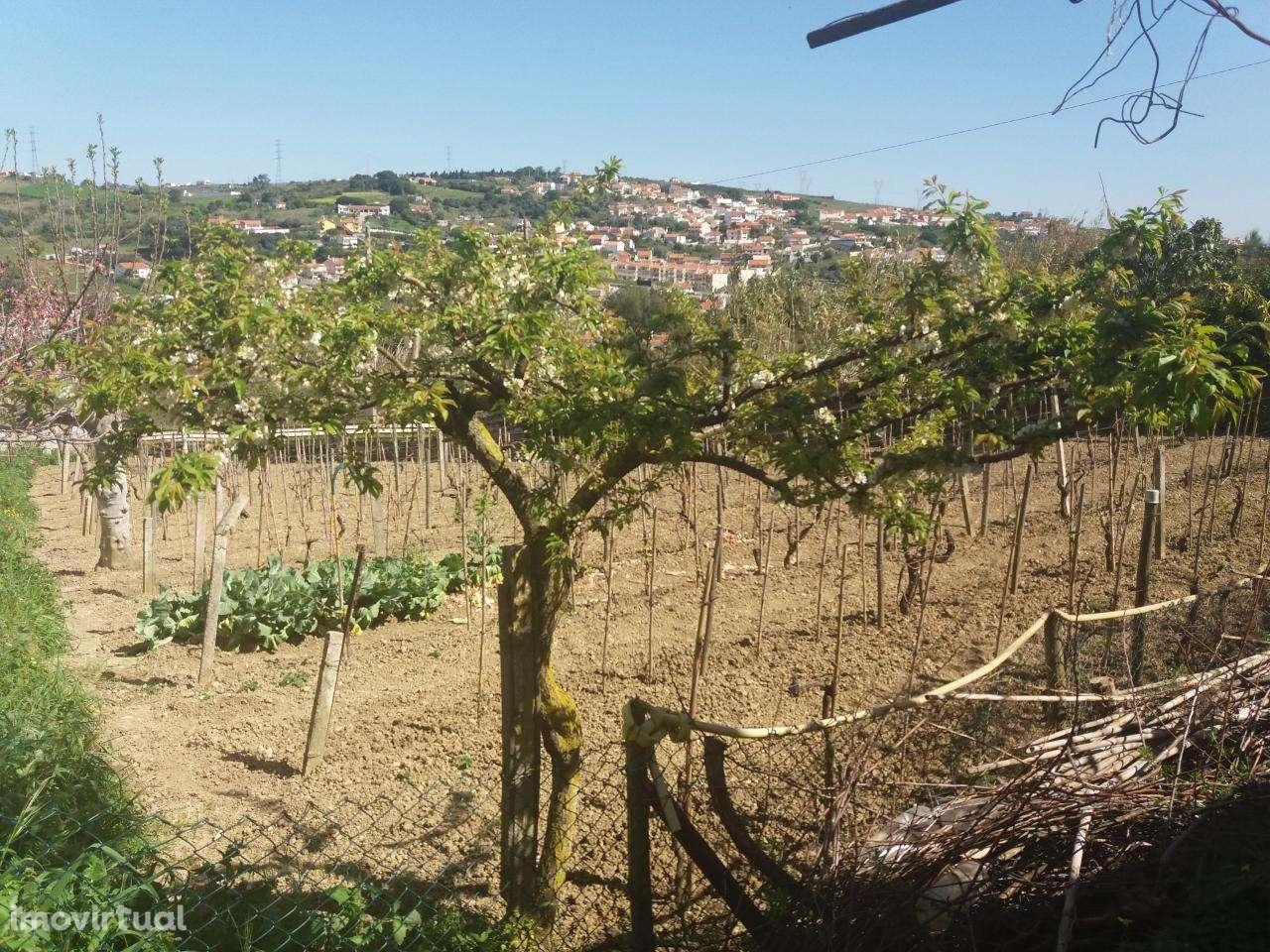 Quintas e herdades para comprar, Alhandra, São João dos Montes e Calhandriz, Vila Franca de Xira, Lisboa - Foto 2
