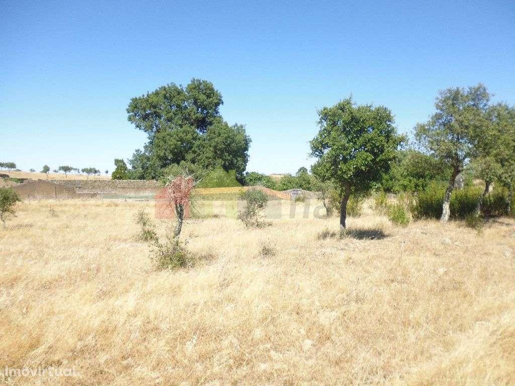 Quintas e herdades para comprar, Almodôvar e Graça dos Padrões, Beja - Foto 14