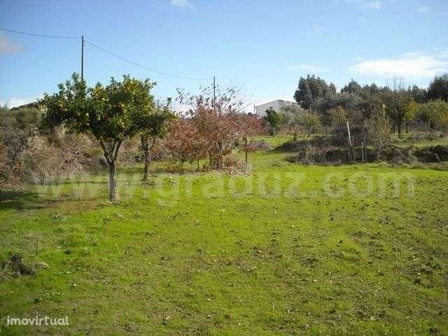 Terreno para comprar, Almaceda, Castelo Branco - Foto 9