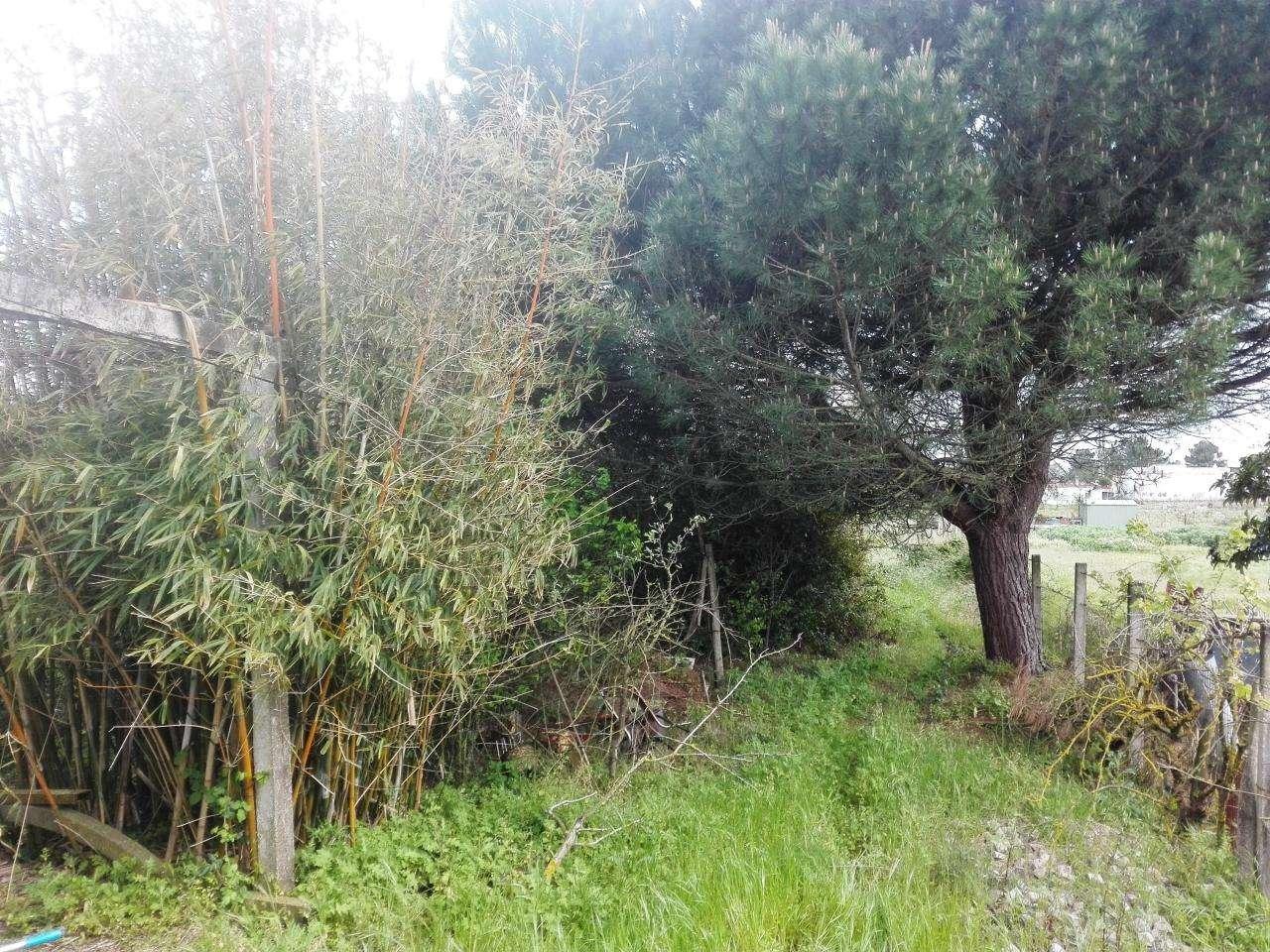 Quintas e herdades para comprar, Quinta do Anjo, Setúbal - Foto 10