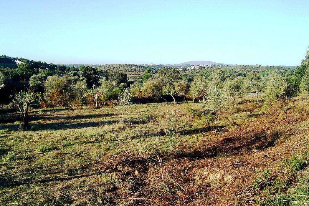 Terreno para comprar, Casais e Alviobeira, Santarém - Foto 4