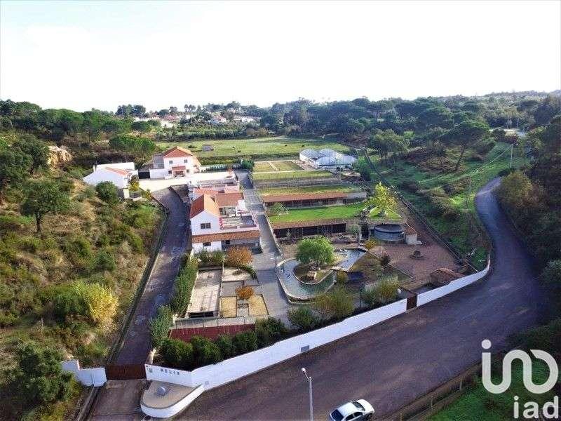 Quintas e herdades para comprar, Chamusca e Pinheiro Grande, Santarém - Foto 15