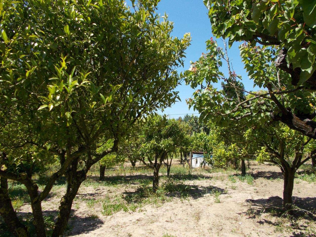 Quintas e herdades para comprar, Vale de Santarém, Santarém - Foto 14