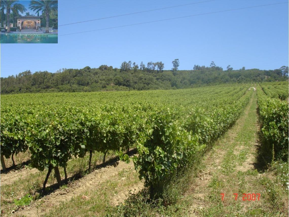 Lisboa / Arruda dos Vinhos - Herdade de 65H.  produção de vinhos