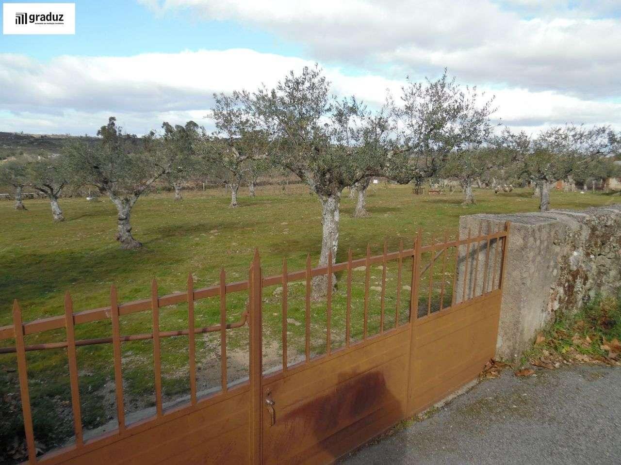 Terreno para comprar, Alcains, Castelo Branco - Foto 7