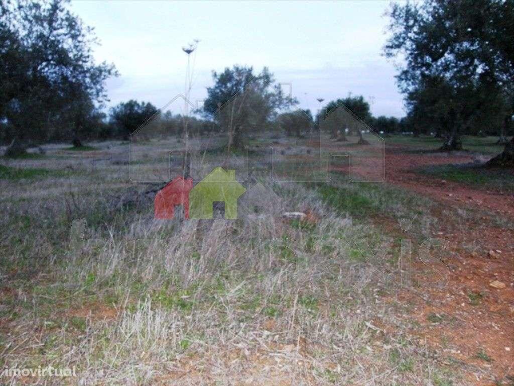 Terreno para comprar, Vila Nova de São Bento e Vale de Vargo, Serpa, Beja - Foto 2