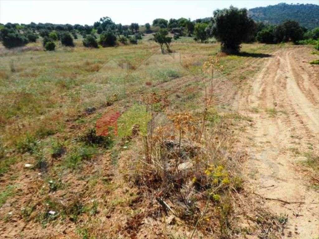 Terreno para comprar, Pedrógão, Vidigueira, Beja - Foto 16