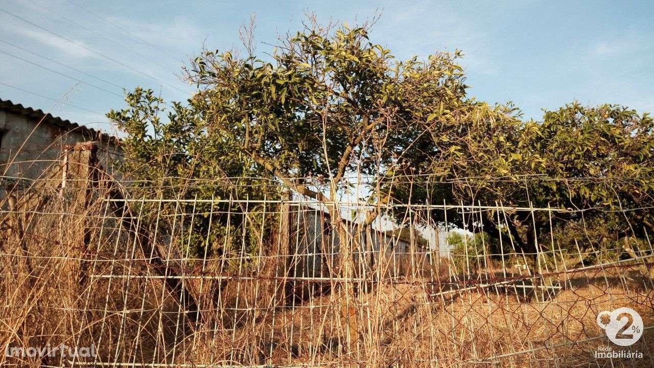 Quintas e herdades para comprar, Palmela, Setúbal - Foto 14