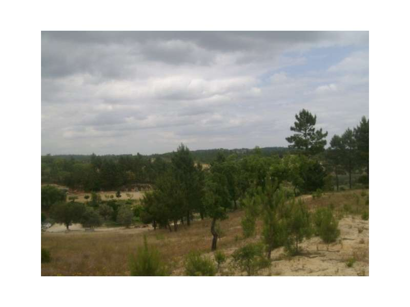 Terreno para comprar, Montargil, Ponte de Sor, Portalegre - Foto 5