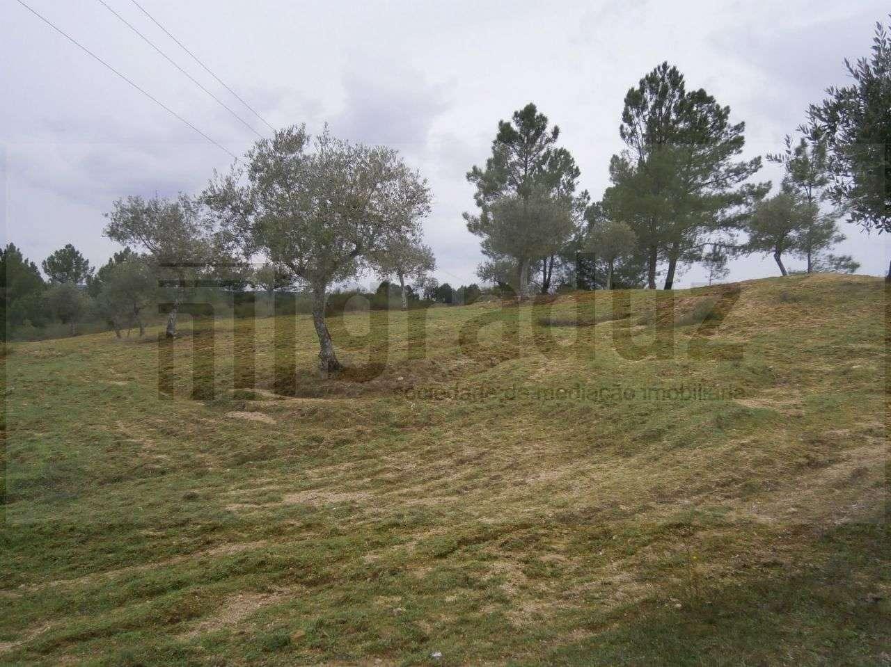 Quintas e herdades para comprar, Alcains, Castelo Branco - Foto 6