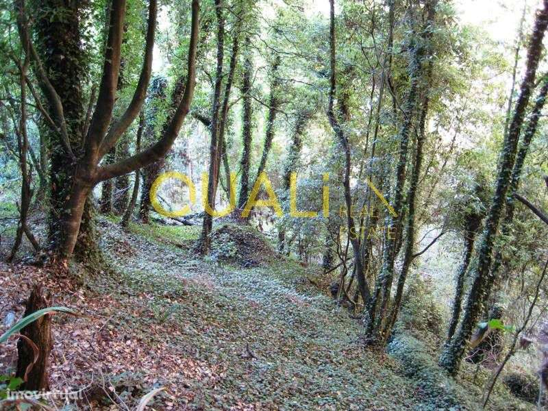 Terreno para comprar, Santa Cruz, Ilha da Madeira - Foto 1