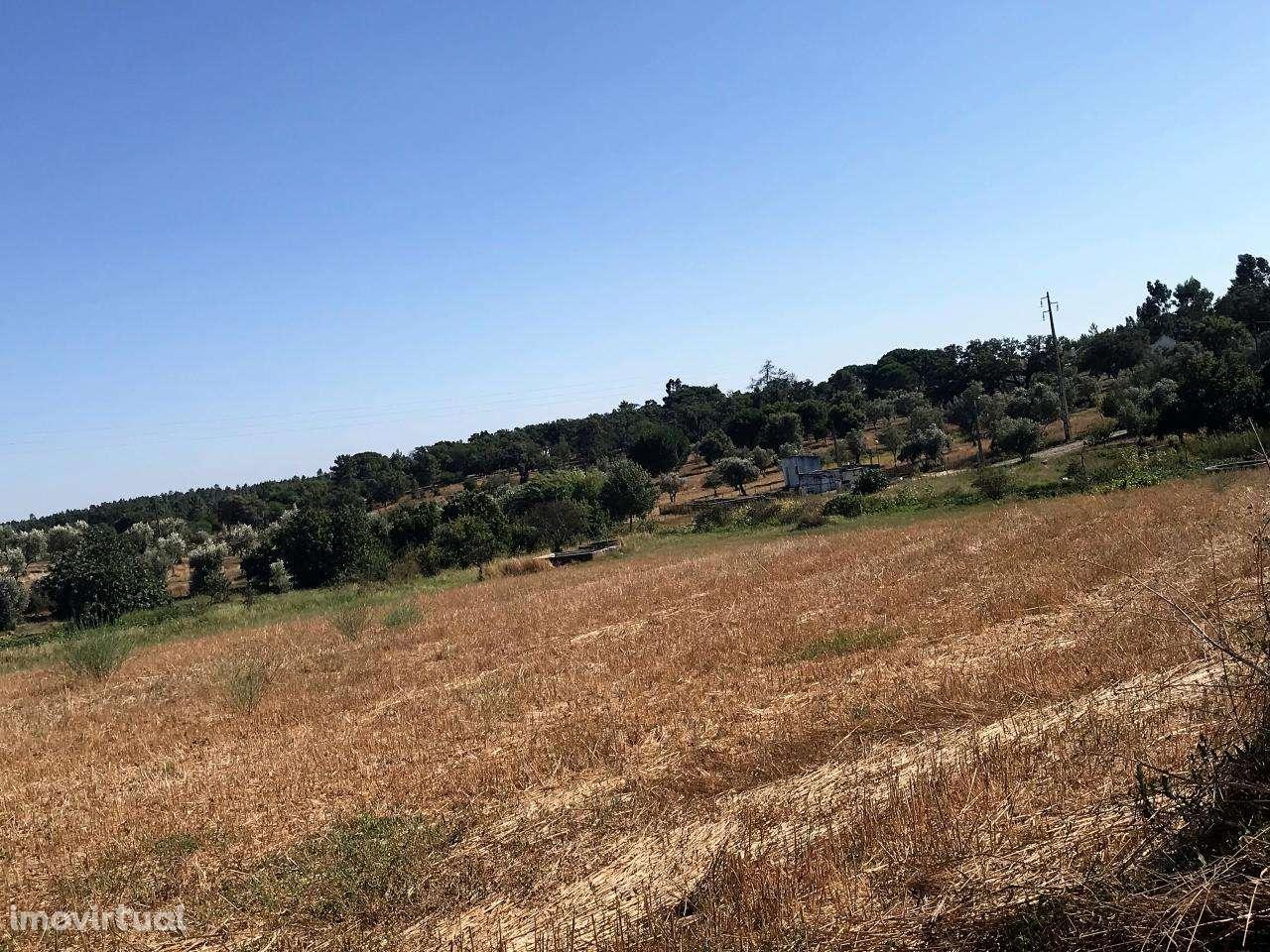 Quintas e herdades para comprar, Cortiçadas de Lavre e Lavre, Montemor-o-Novo, Évora - Foto 16