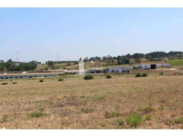 Terreno para comprar, Quinta do Anjo, Setúbal - Foto 4